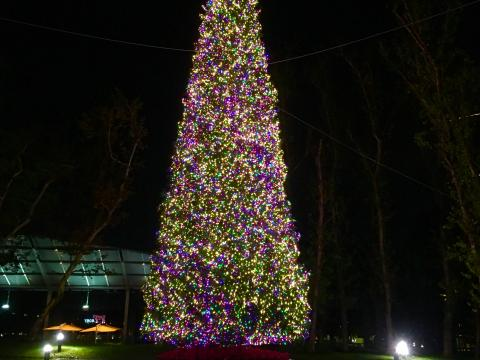 The Christmas tree lit up at Town Center Park