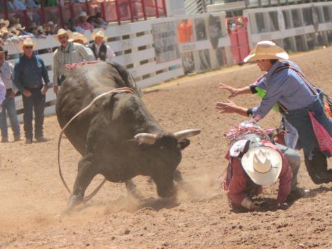 シャイアン・フロンティア・デイズの雄牛乗りイベント
