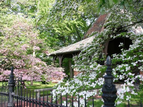 ドッグウッド・トレイル・セレブレーションできれいに咲き誇る花