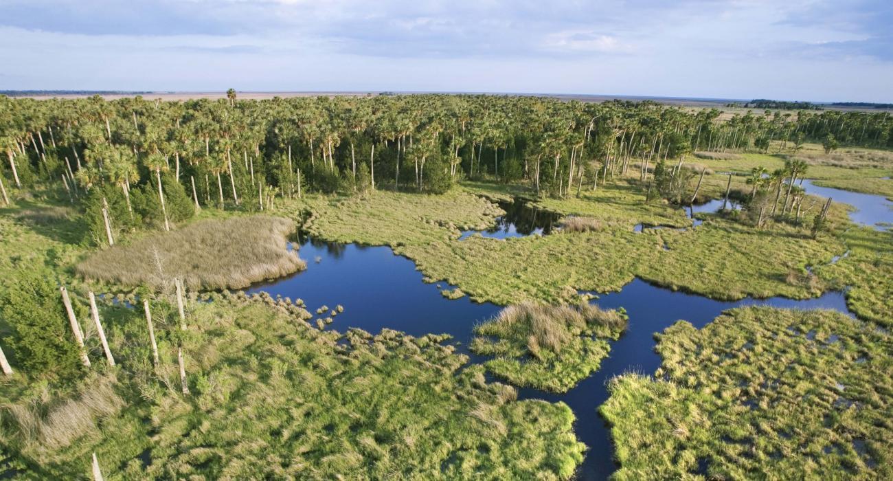 エバーグレーズ国立公園(Evergl...